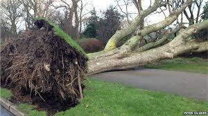 Storm Big Tree Damage