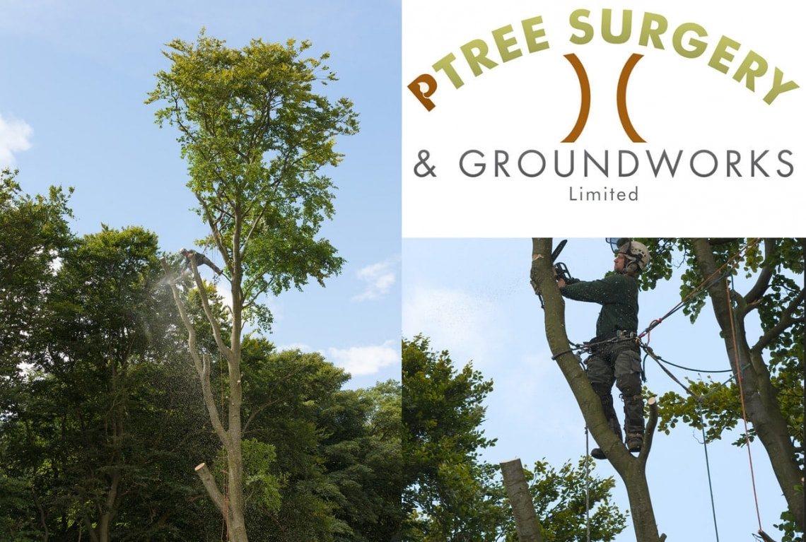 Tree Surgeon Fife